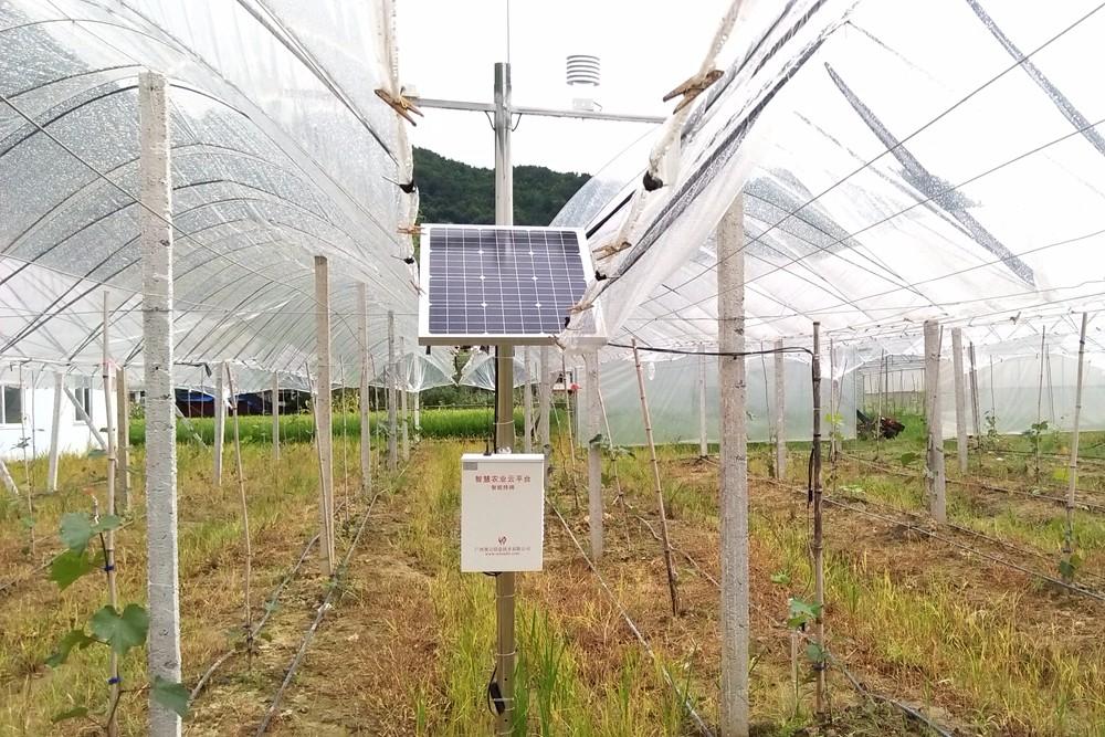 广西东兰县山区开启葡萄智能化产业扶贫生产示范