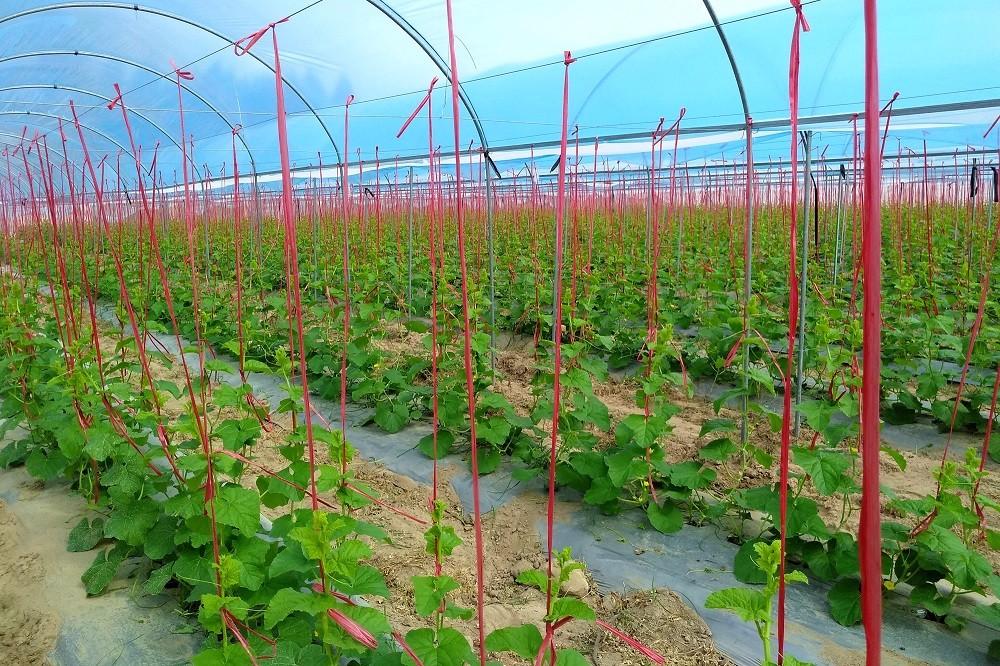 智慧农业布局海南,智果科技打通产与销