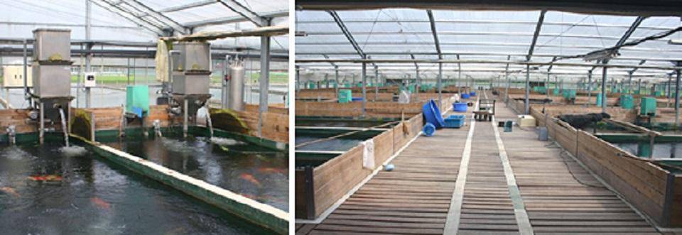 水产养殖也能搭乘智慧农业实现精准高效养殖