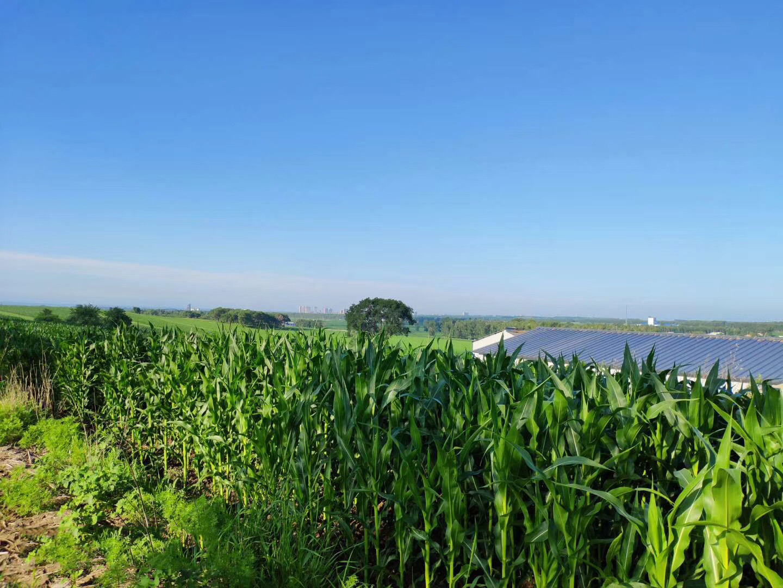 黑龙江水云科技引入智慧农业技术,进行生产示范