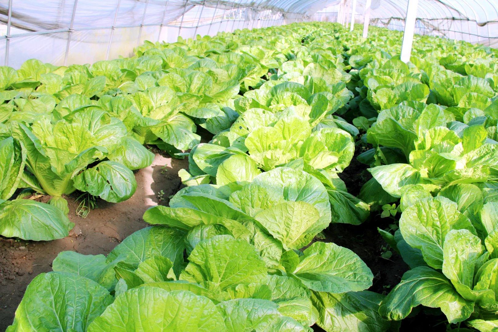 甘肃张掖现代农业示范园,开启智慧农业标准化种植