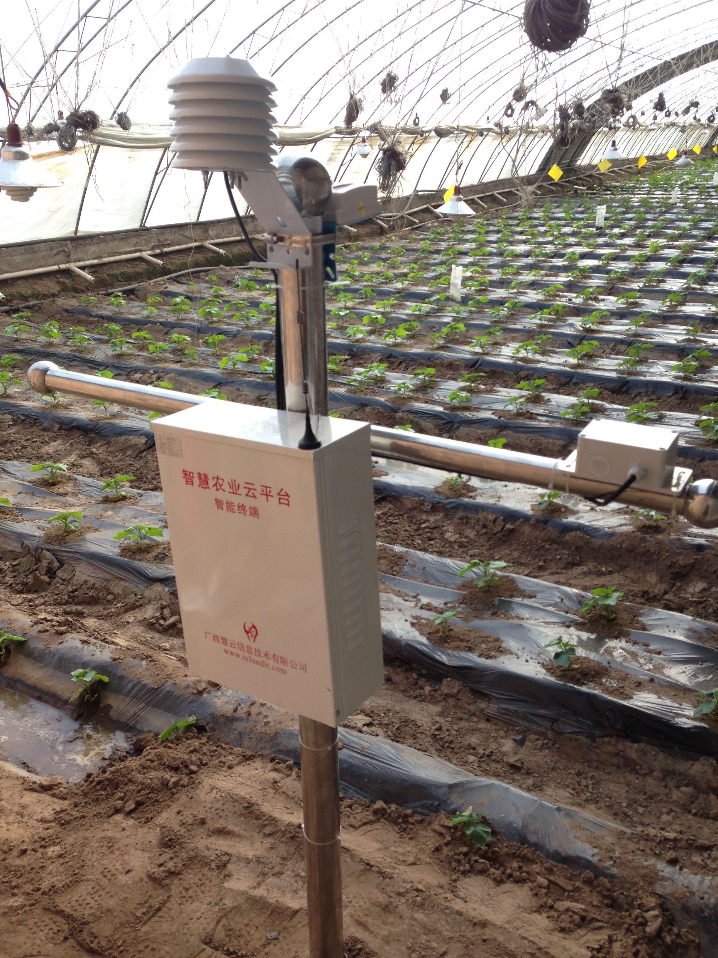 青海大通县国家级现代农业示范园,利用智慧农业实现一年四熟