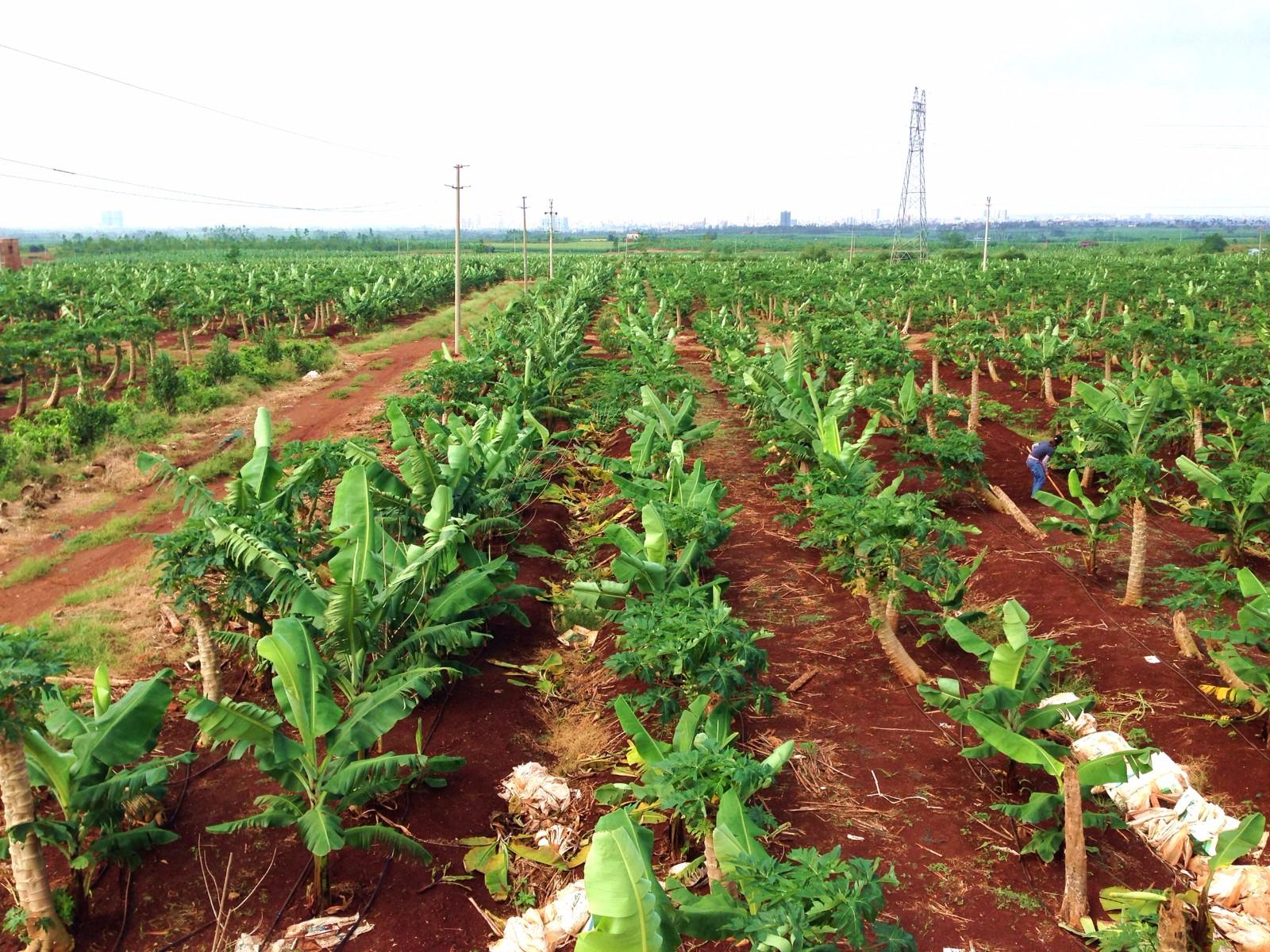 绿源果菜农业发展公司