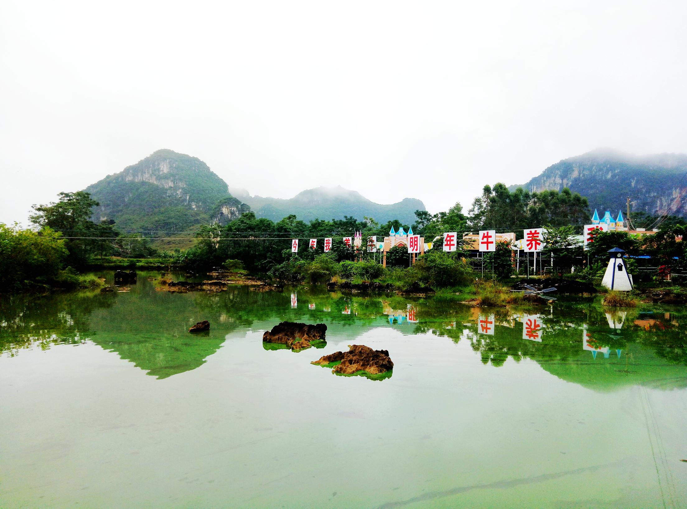 广西山水牛