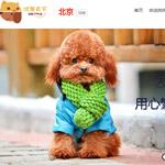 北京优宠天下网站建设