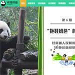 熊猫频道网站建设