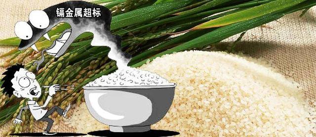 大米安全事件频出,而他们家的水稻却能全程溯源,从源头把控品质