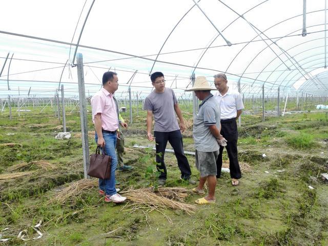 荒废了四分之三的葡萄园,竟也能为果业巨头供应优质的阳光玫瑰
