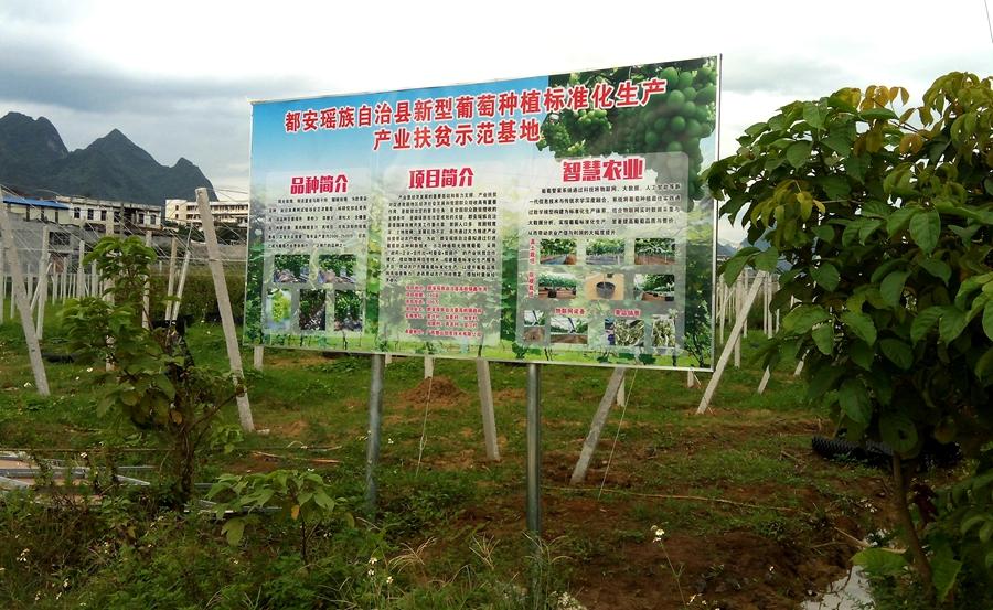 都安产业扶贫示范基地,智慧农业标准化生产