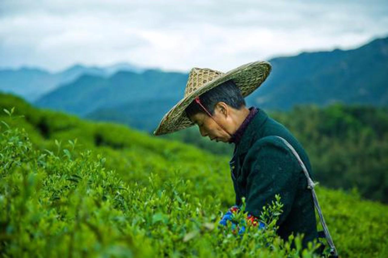 智慧农业布局湘西,助力实现精准脱贫
