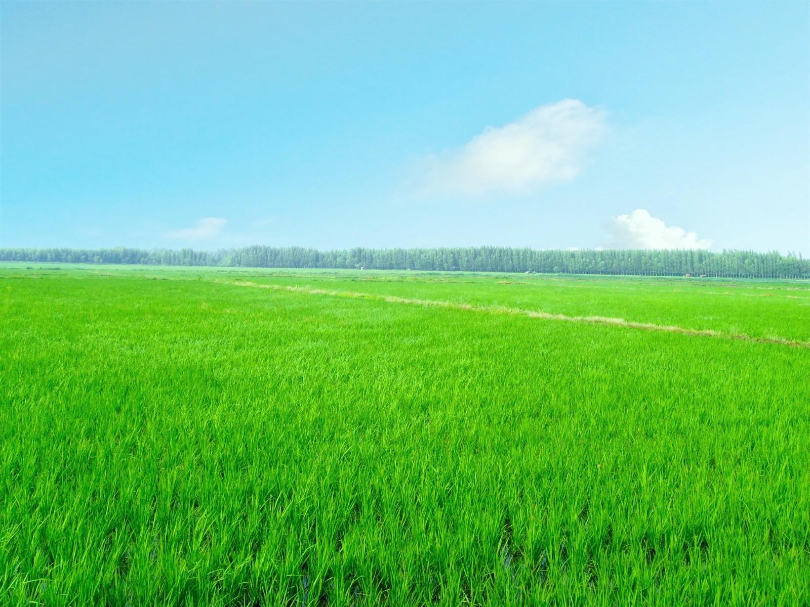 """绿水青山就是金山银山,""""智慧农业""""、""""农业物联网""""正为生态农业架起保护网"""