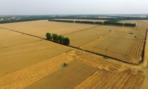 """被历史铭记的苦难""""黄泛区"""",如今搭乘智慧农业的快车,成为一方沃土"""