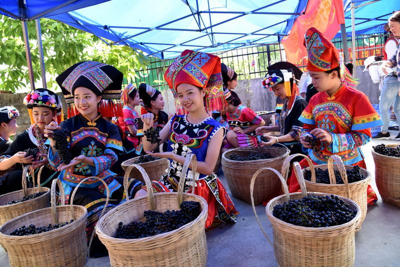 广西都安利用农产品溯源打开销售通路,野生山葡萄走出大瑶山