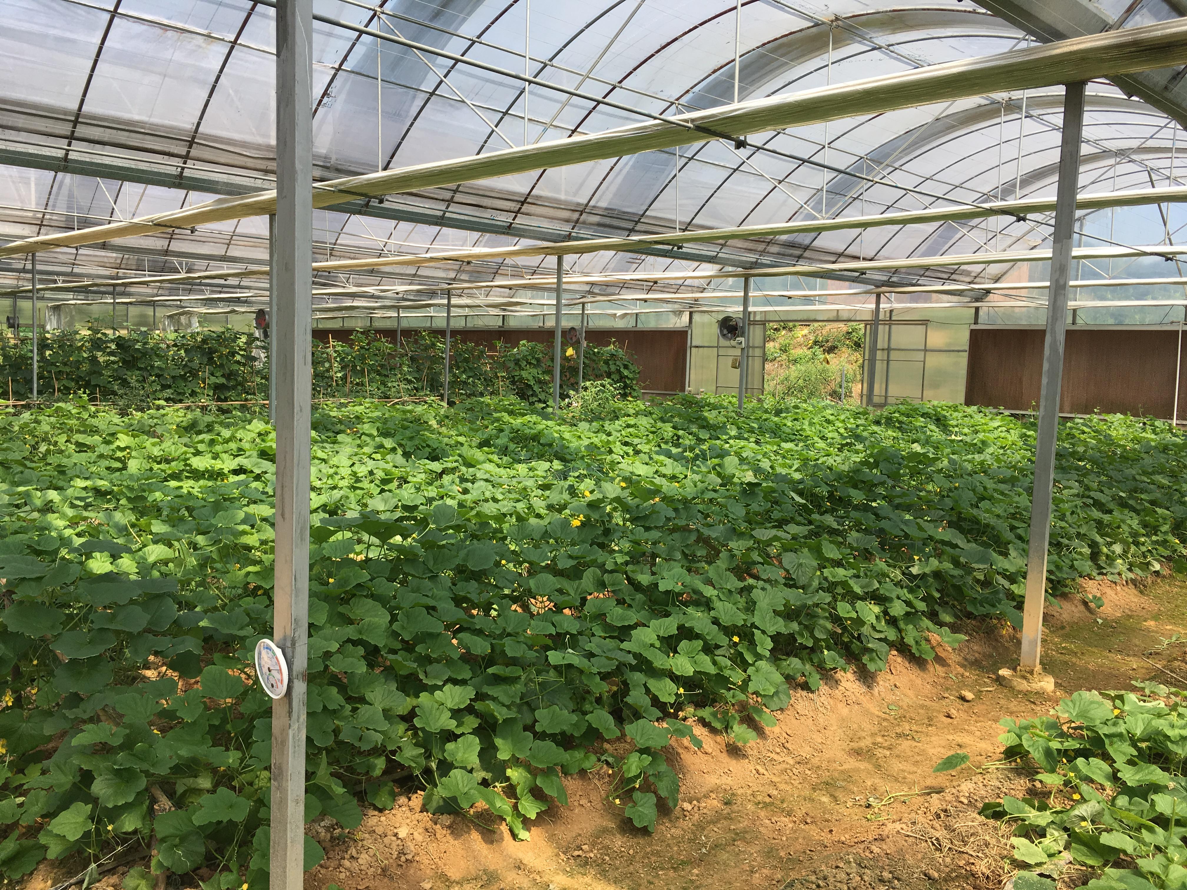 金都现代农业国家级蔬菜标准园,智慧农业全程安全溯源