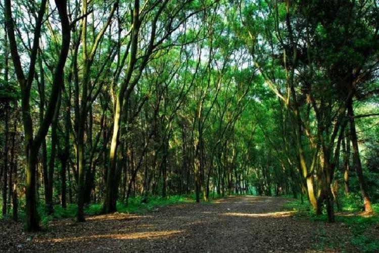 广西柳州三门江森林公园利用智慧农业技术,完善森林火灾防范管理