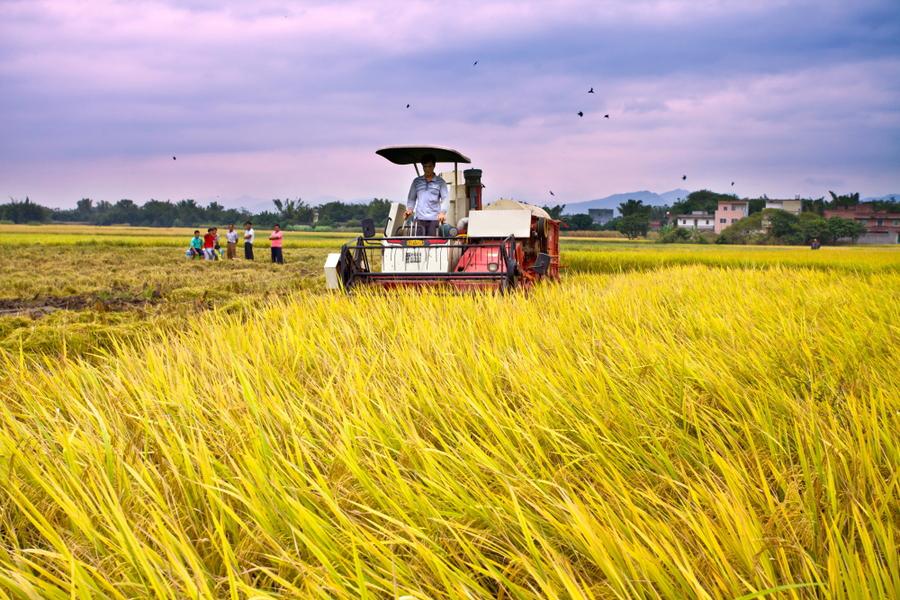 什么是智慧农业?――天润智力的服务基地成功示范