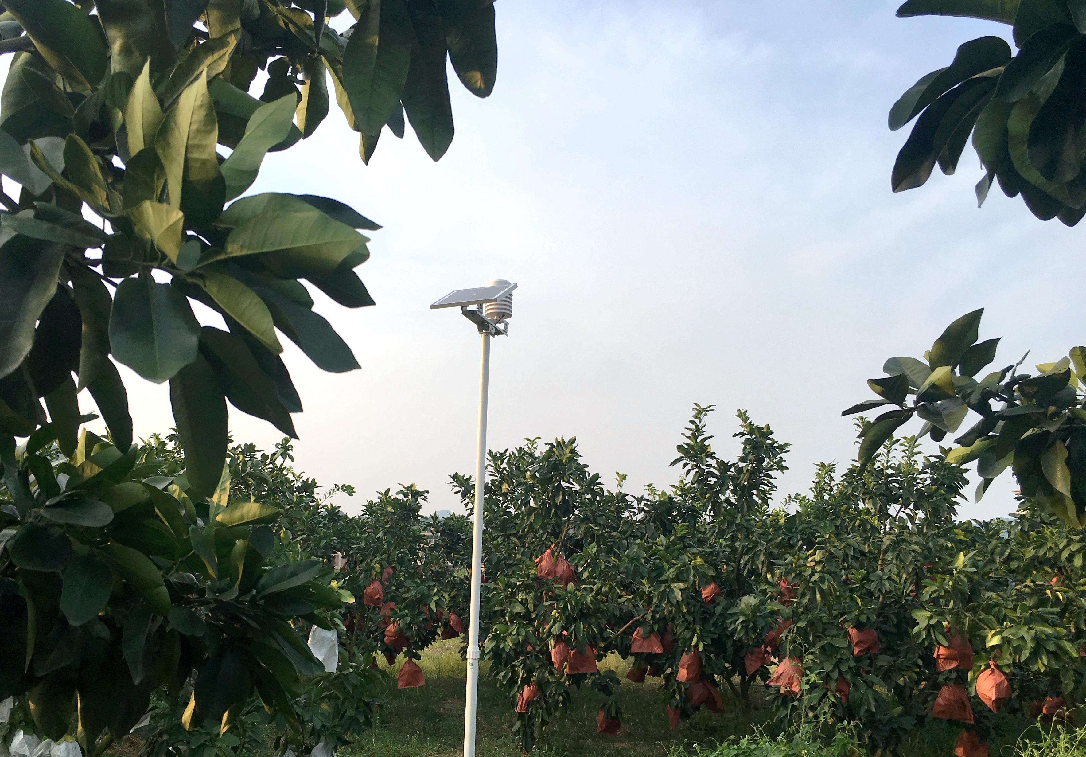 耘小宝服务智慧果业生产招牌果基地――福建三红蜜柚,异常气象提前预警